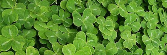 Featured Image Master St Patricks Day